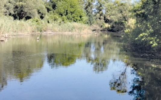 Что держит веси на плаву… река Мечетная