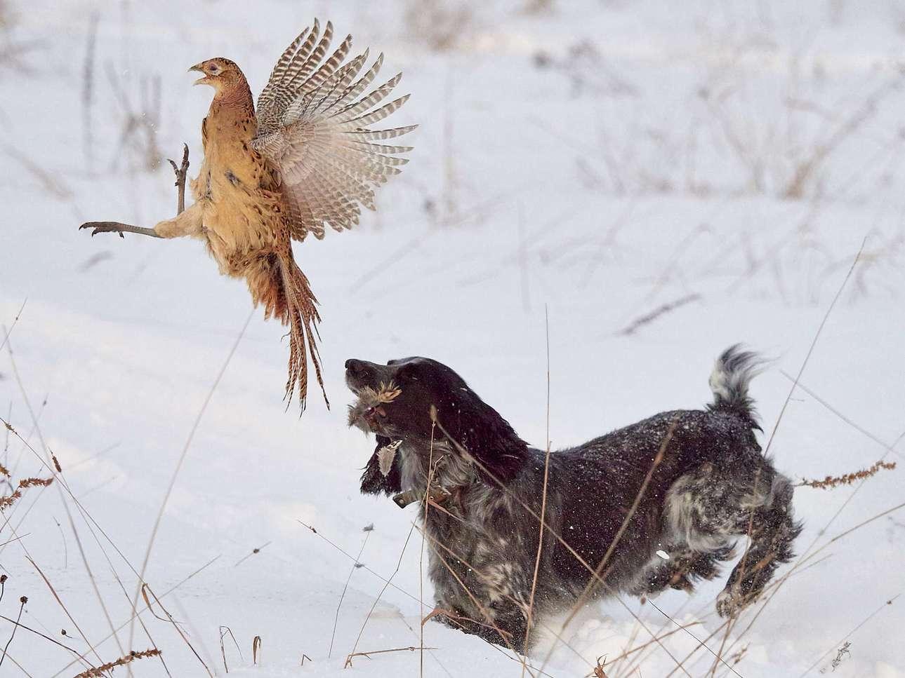 Вступили в силу новые правила охоты