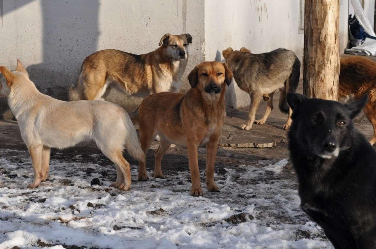 Собаки без привязи – это не просто нарушение, но и опасность для окружающих