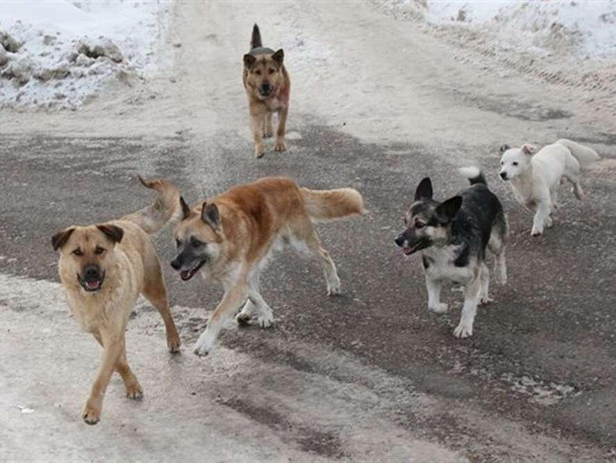 Бродячие собаки разгуливают по слободе