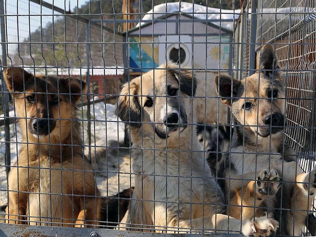 В столице региона на землях кладбища построят приют для бездомных животных