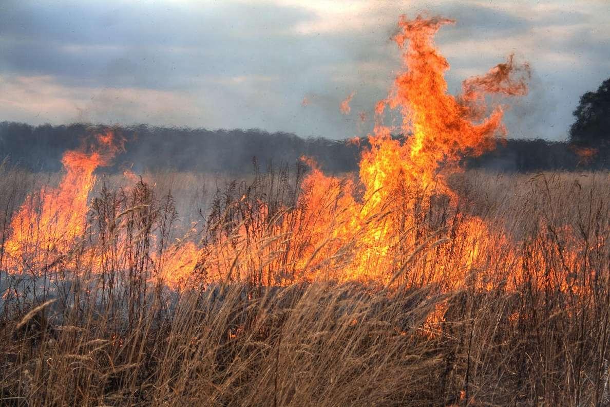 С 29 апреля в Донском регионе вводят особый противопожарный режим