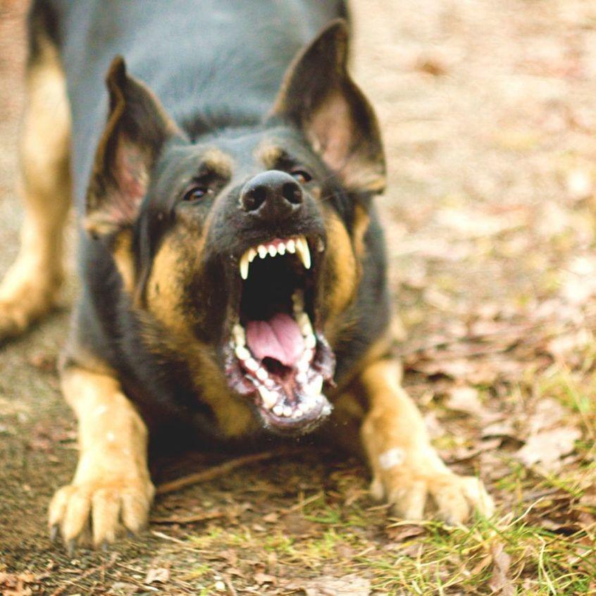 Беспривязные собаки становятся серьезной угрозой