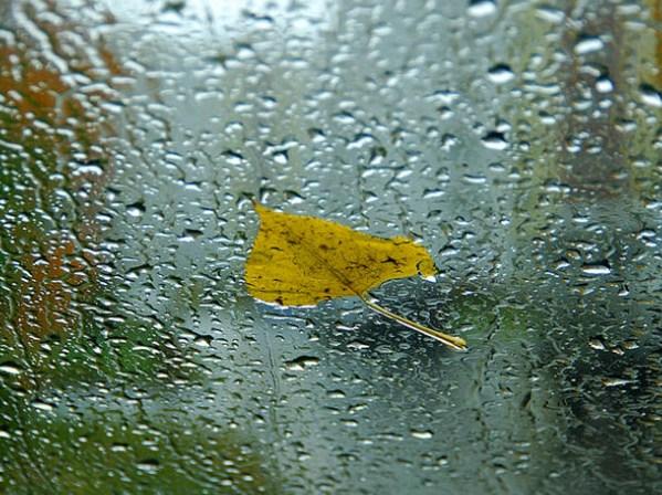 В Ростовской области ожидаются продолжительные дожди в конце недели