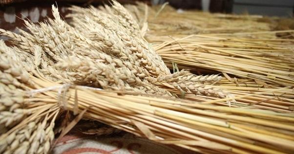 Больше 400 тысяч гектаров прошли апробацию и регистрацию в Ростовской области