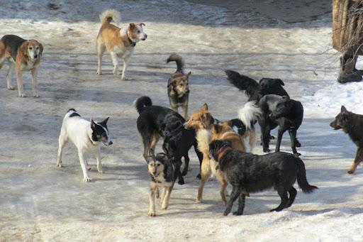 В Ростове вынесен приговор мужчине, расстрелявшему бродячих собак на Суворовском