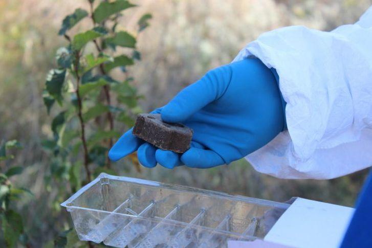 В кашарских охотугодьях разложат приманки с вакциной от бешенства