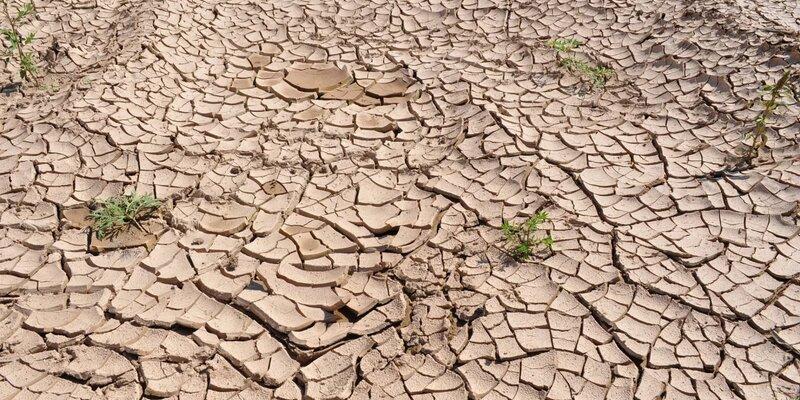Донской регион через 30 лет столкнется с засухой и болезнями