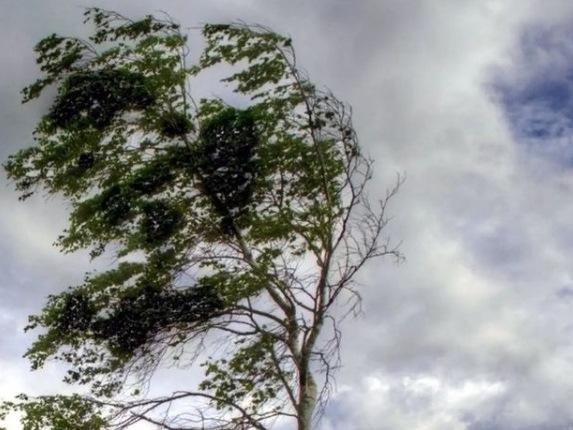 Сильный ветер с холодом накроет Ростовскую область