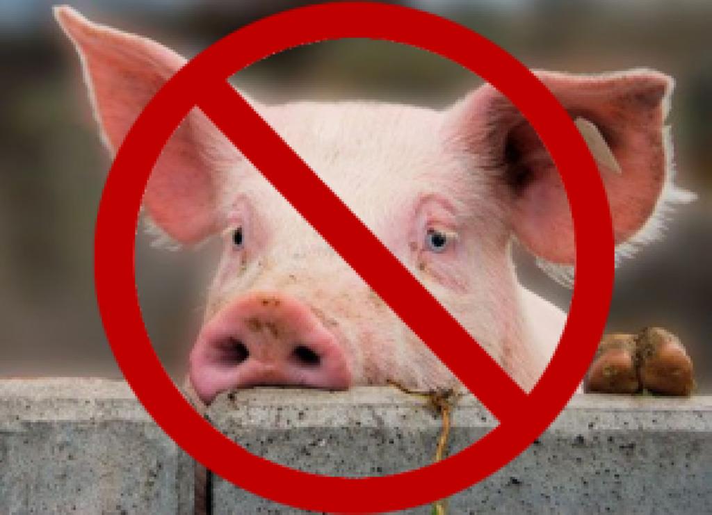 Инфицированная вирусом африканской чумы свиней продукция свиноводства выявлена Управлением Россельхознадзора в Ростовской области